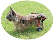 犬用車椅子 XS